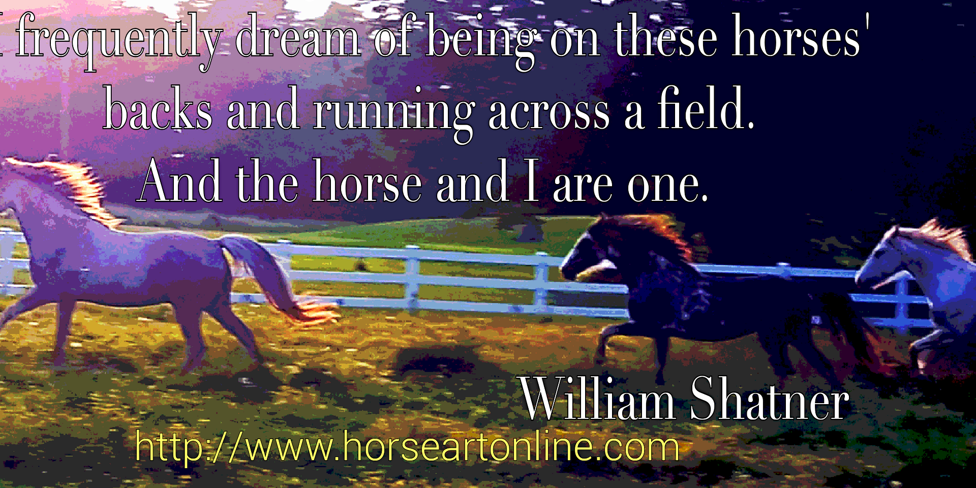 Horse Quotes Horse Memes Horse Photography