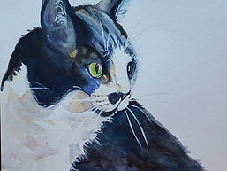 Black and white tuxedo cat watercolor by Sue Steiner