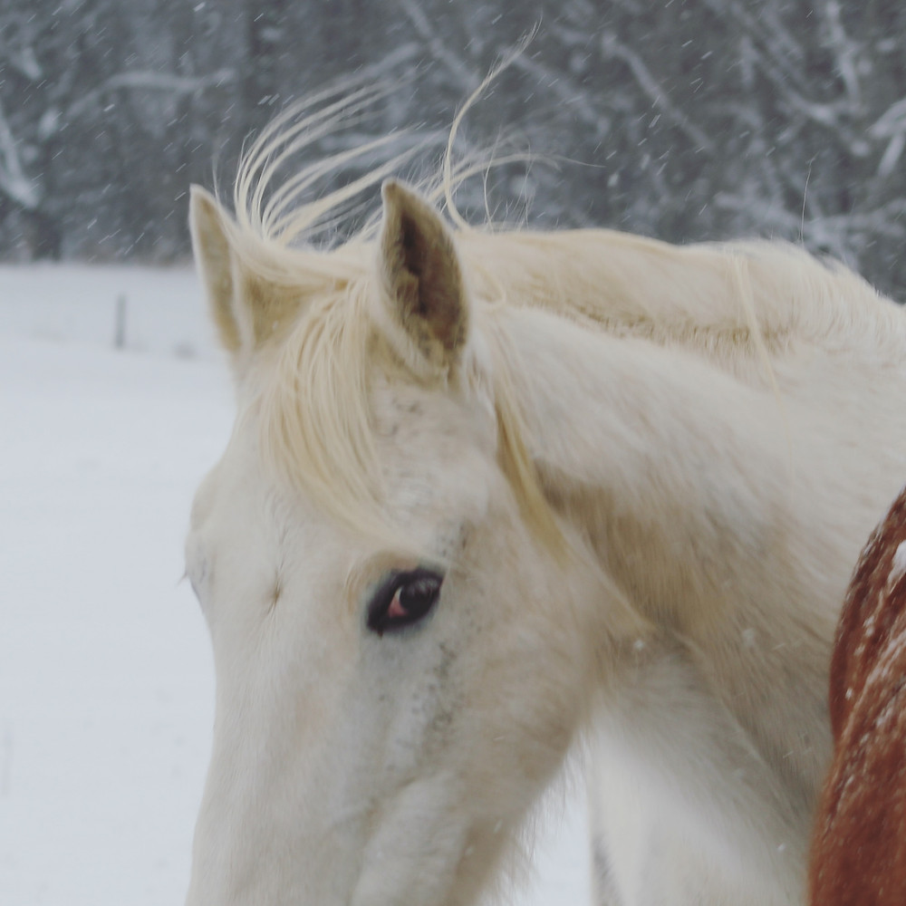 white horses in photography