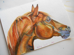 arabian horse, watercolor