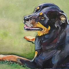Rottie Mix Dog Portrait