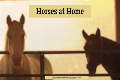 Boarding Stable or Horse at Home? Which Way is Better?