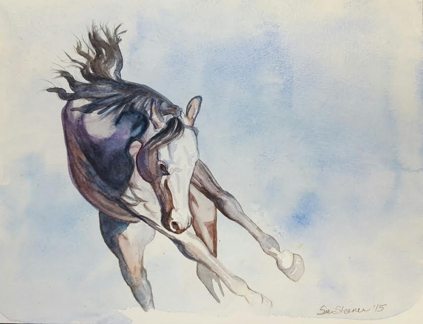 white horse bucking watercolor painting by Sue Steiner