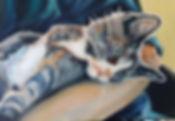 grey tabby oil painting