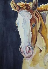 Sunlit foal watercolor by Sue Steiner
