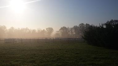 horse farm in morning mist