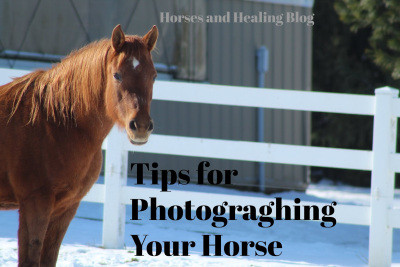 3 Easy Tips on Photographing your Horse