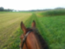 trail horse in green grassy field