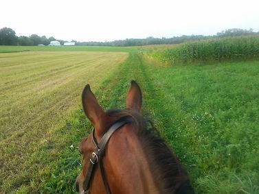 trail horse in green grassy field