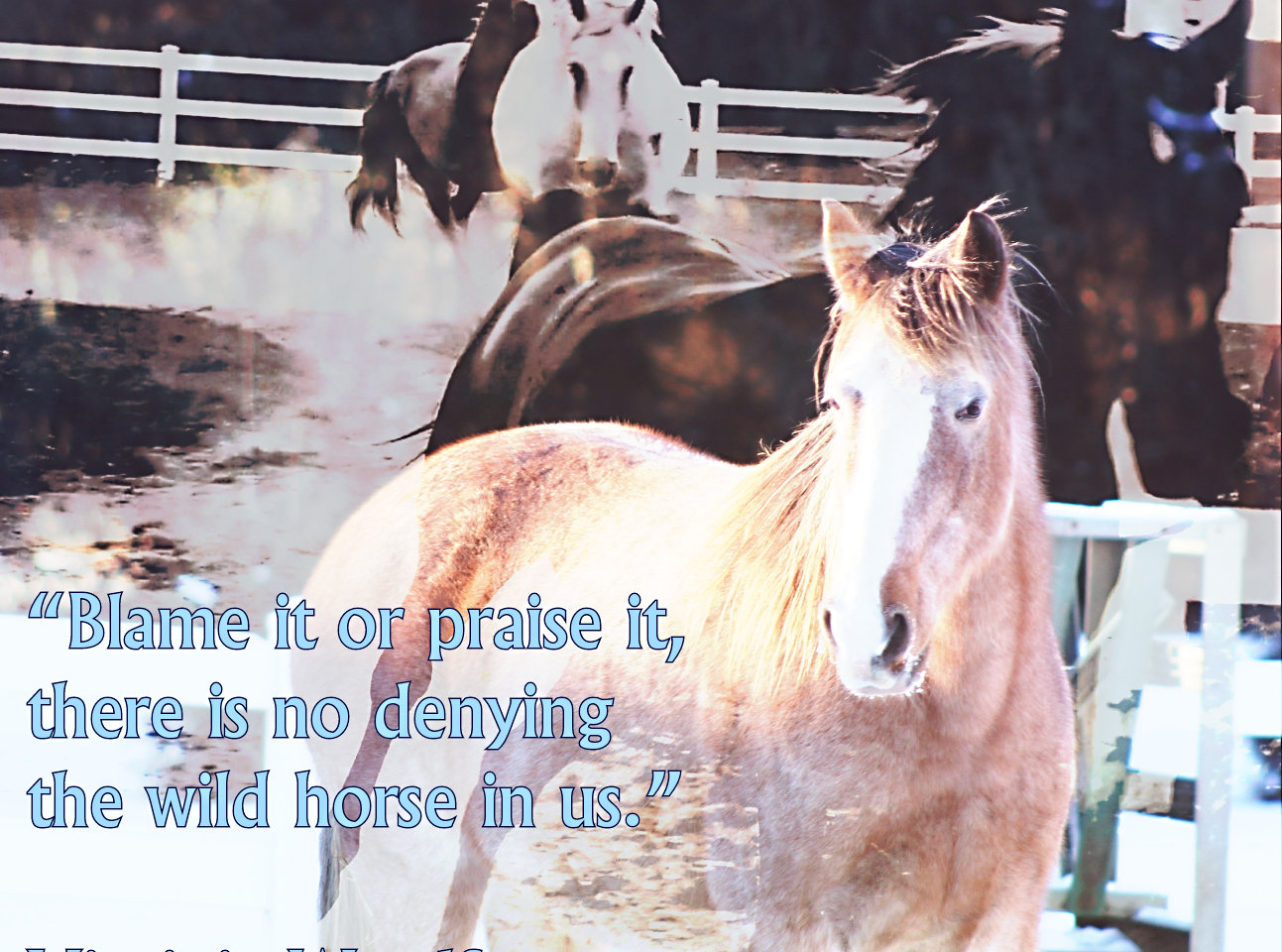 Wild Horse quote and meme