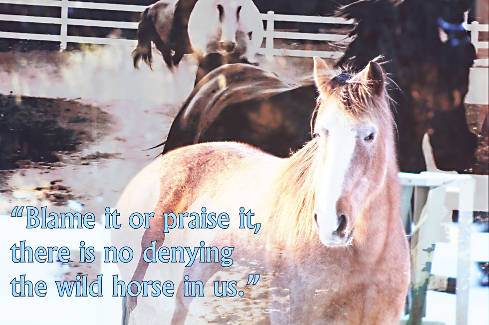 Horse quotes, horse memes, horse photography
