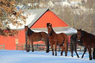 Winterizing Your Barn Part II