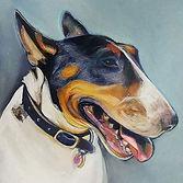 Bull Terrier Pet Portrait