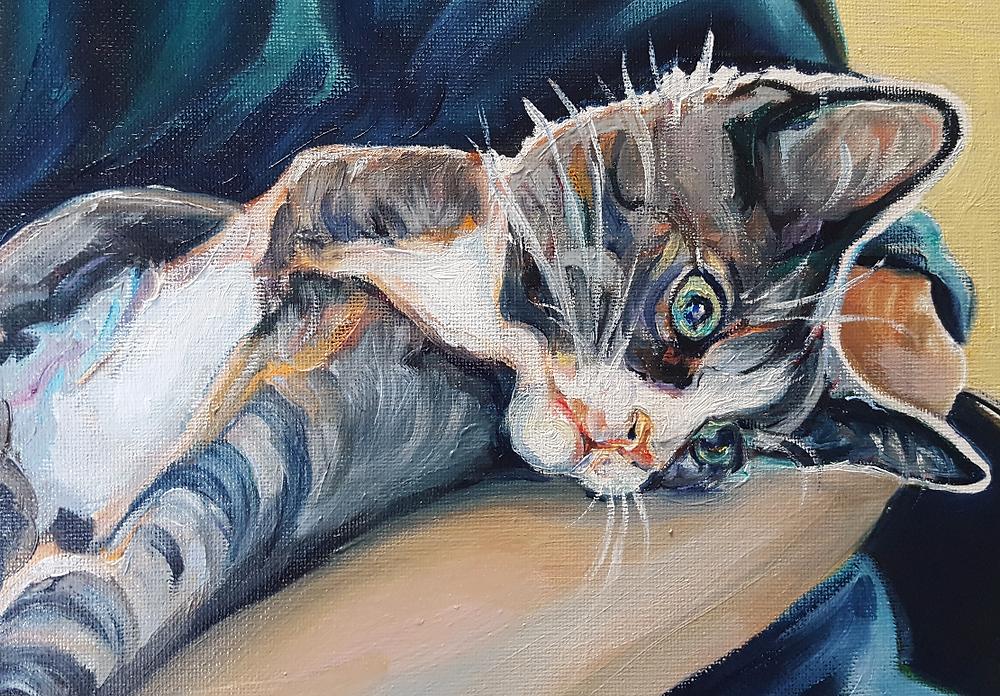 cat pet portrait in oils