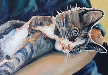 Silver Tabby Pet Portrait in Oils by Sue Steiner
