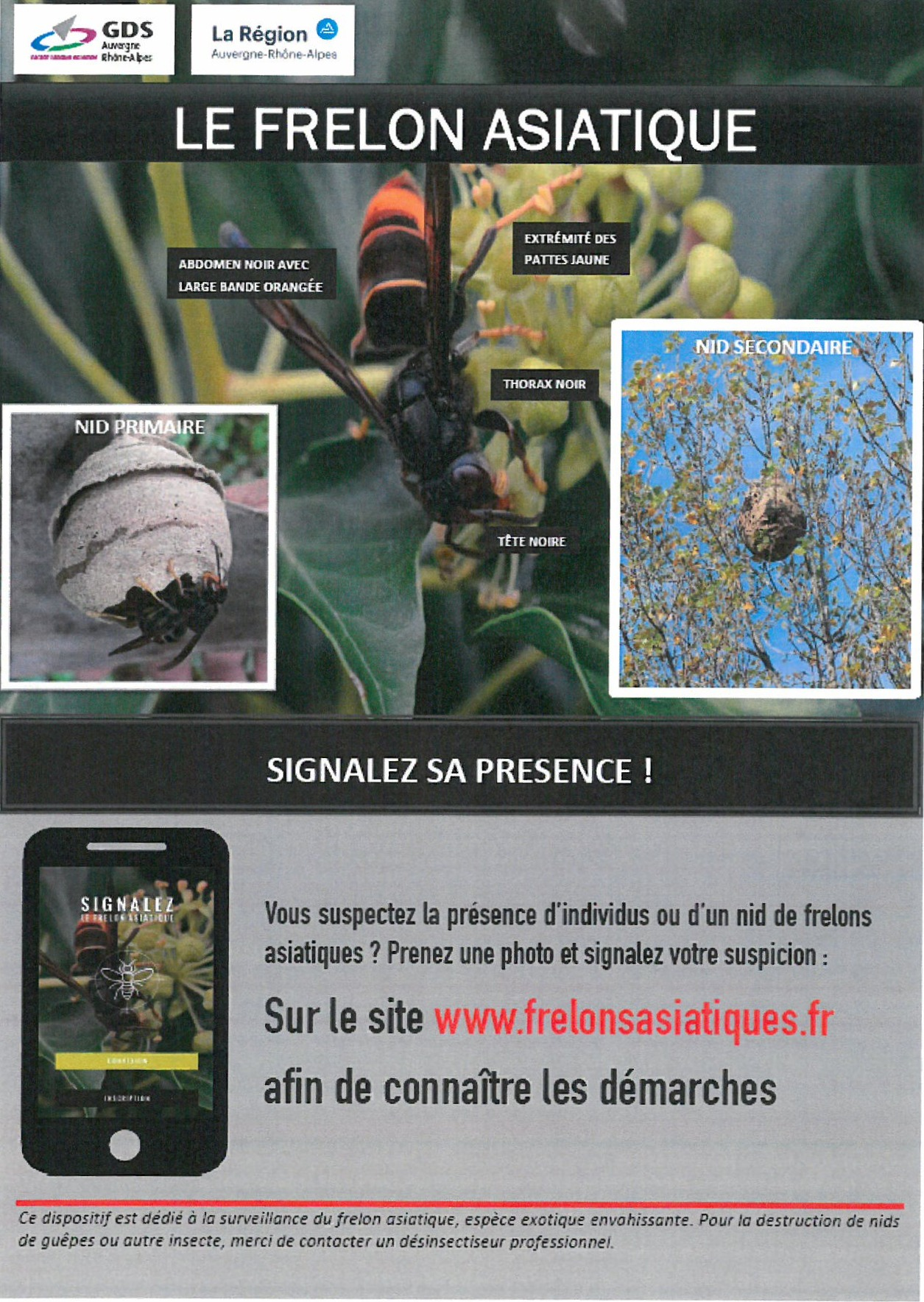 Frelon%20asiatique%20_edited
