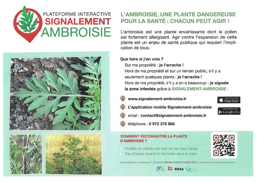 Signalement ambroisie 2.jpg