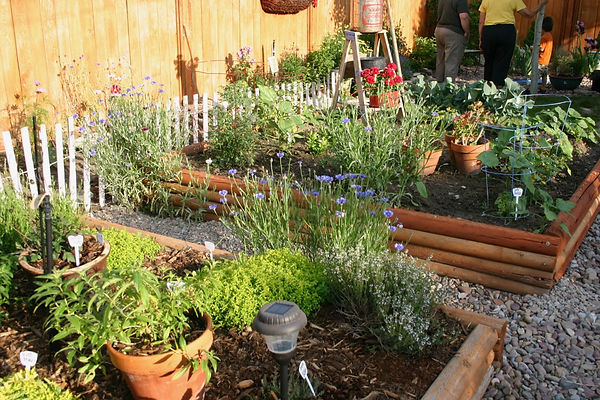Raised beds in a backyard garden.jpg