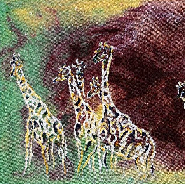 Eight Giraffes