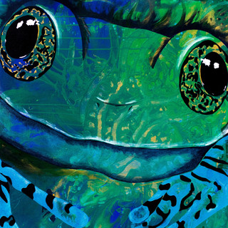 Vermiculated Tree Frog