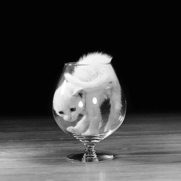 walter-chandoha-cat-photography-inspirat