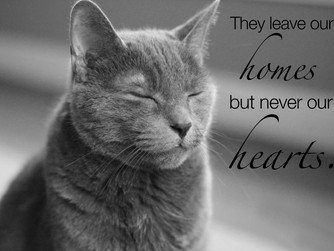 Dealing with the loss of a beloved pet