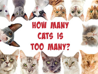 How many Cats are too many - A Christmas blog