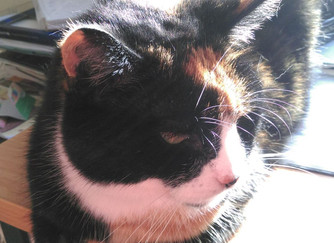 Momo's Story - From Feral to Lapcat