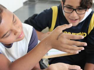 Aula sobre anelídeos: estudando as minhocas (7º ano)