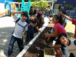 Projeto Horta no KIDS