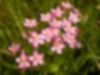 Fleur de Bach.png