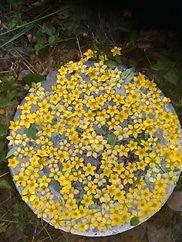 atelier elixir floral  IMG_3270.JPG