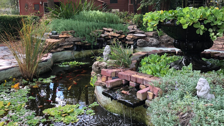 Beautiful koi pond in backyard