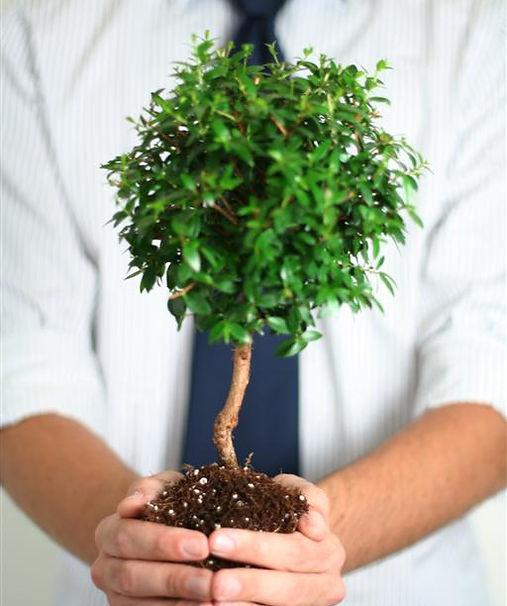 אדם מחזיק עץ