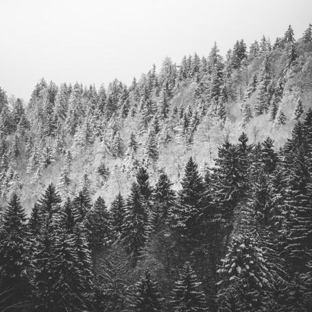 Fotografie - Natur