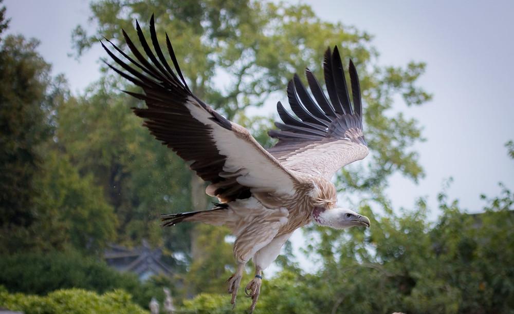 Voler, ailes déployées