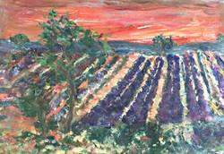 Soirée en Provence