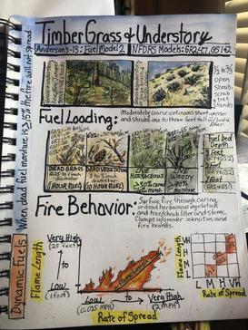 Vegetation (Fuel Model) Sketchnotes