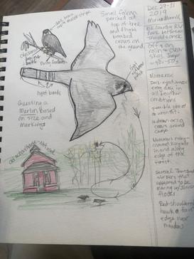 Wildlife Behaviors & Observations