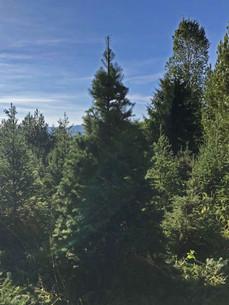 trees 5.jpg