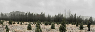 Lots of trees
