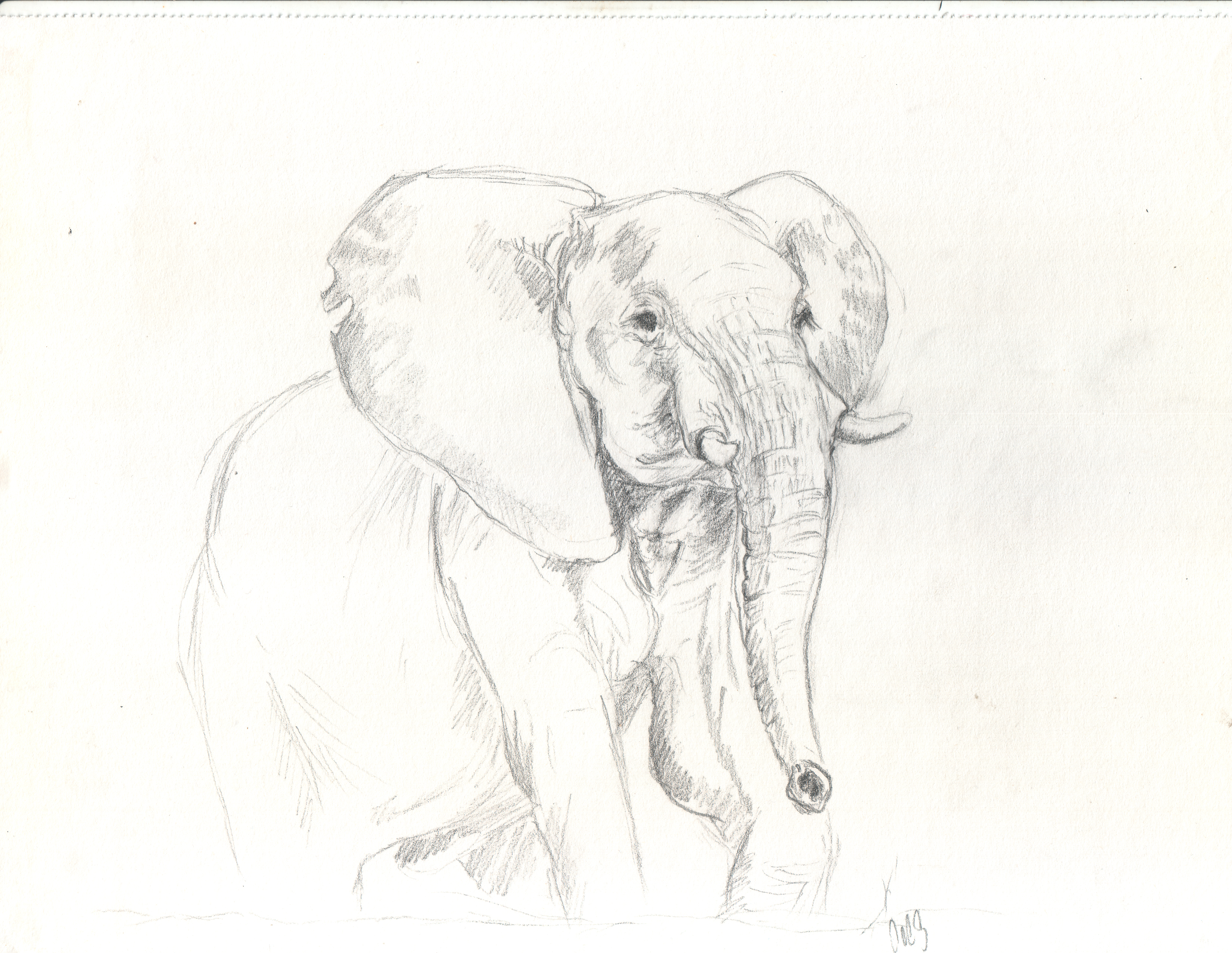 Elephant Viviane Gernaert