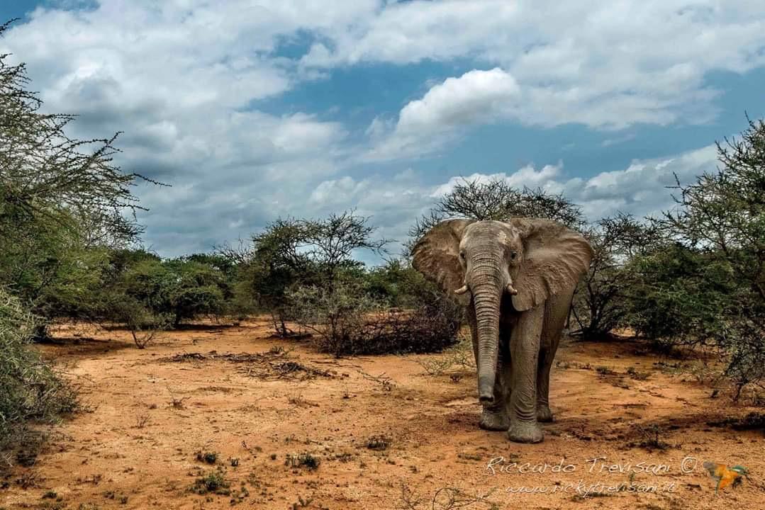 Elephant Riccardo Trevisani