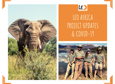 LEO AFRICA Project updates - Covid-19