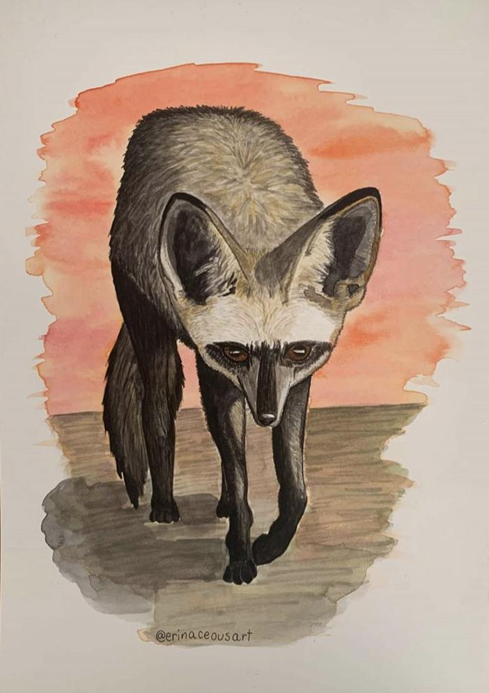 Bat Eared Fox Erin Monaghan