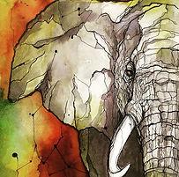 elephant Roby.jpg