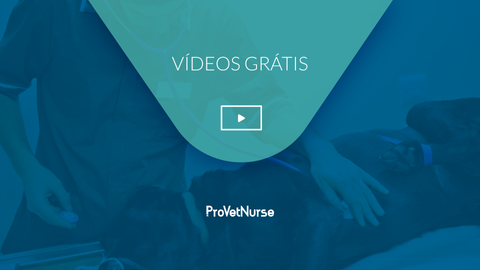 videos gratis.png