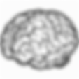 brain-512.png