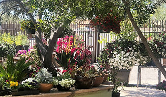 flowers and other plants inside silverbell nursery