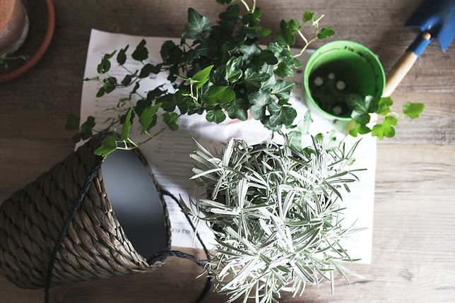 plants and potting tools